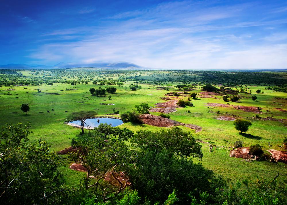 Paczki i przesyłki do Tanzanii, savanna